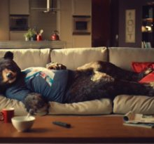 niedźwiedź na kanapie