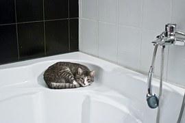 cat-1052060__180