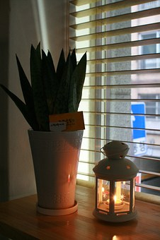 potted-plant-999432__340