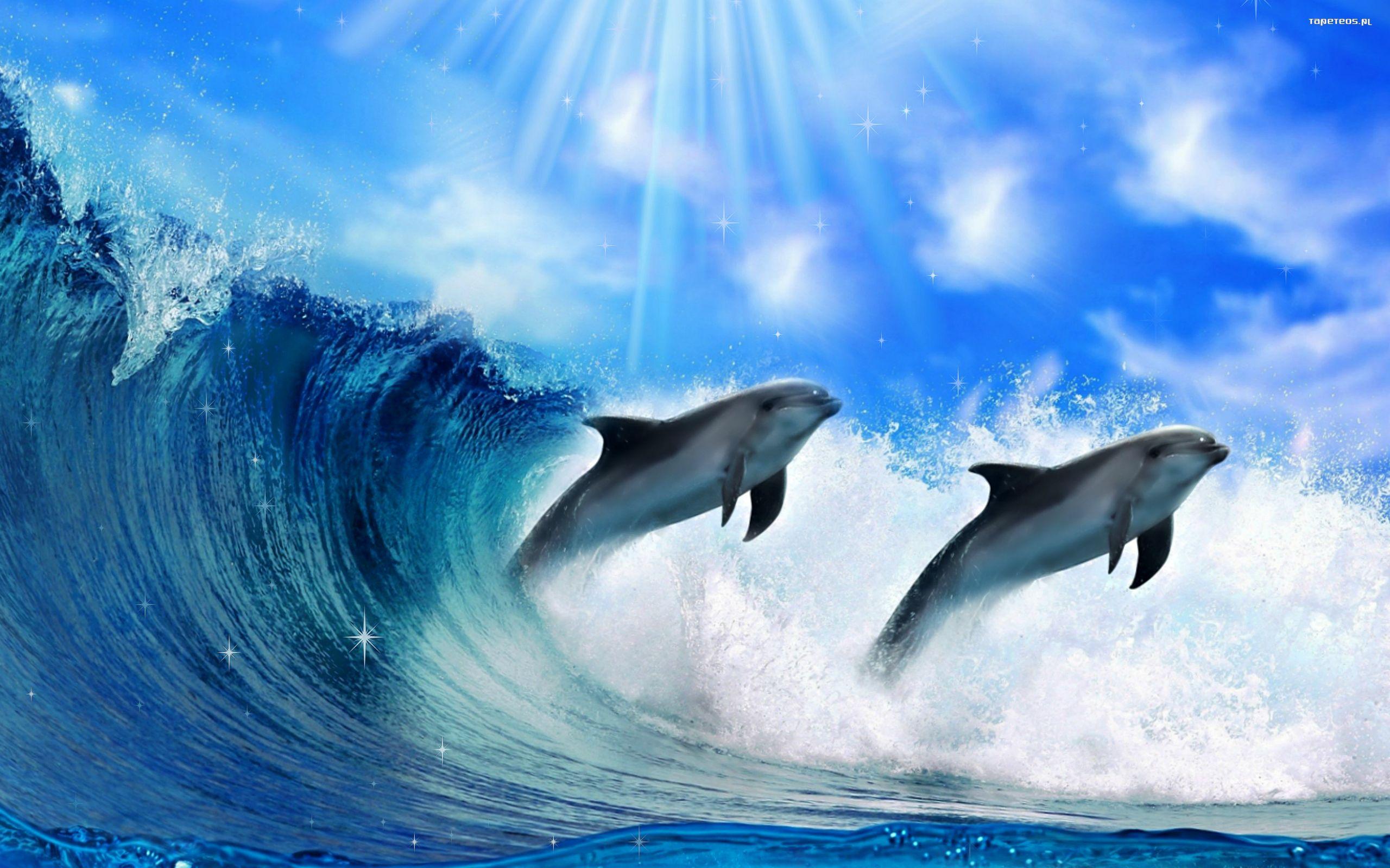 delfiny w morzu