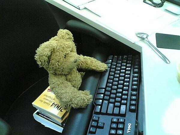 miś przy komputerze